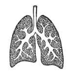 13352-vintage-illustration-of-lungs-pv